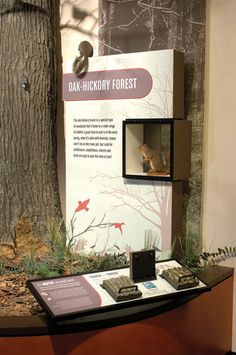 Burpee Museum of Natural History | Taylor Studios
