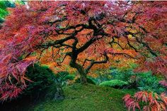 beautiful colour combinations