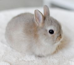 You can find Baby bunnies and more on our website. Baby Animals Super Cute, Cute Baby Bunnies, Cute Little Animals, Cute Funny Animals, Tiny Bunny, Adorable Bunnies, Cute Bunny Pictures, Baby Animals Pictures, Cute Animal Pictures