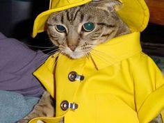 Chantons sous la pluie?