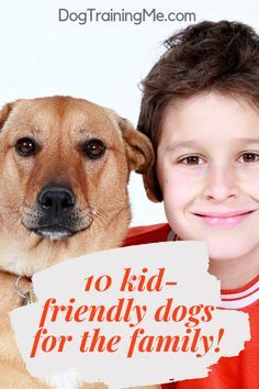 Dogs Are One Of The Most Child Friendly Pets You Can Have At Home They Create An Amazing Connection With Ki Child Friendly Dogs Dog Breeds Friendly Dog Breeds