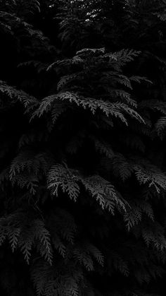 50 Aesthetic Dark Wallpapers For iPhone (Free HD Download!)