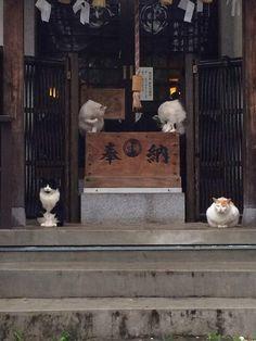 池袋新文芸坐の近所。猫が規則正しく雨宿りしてた。 - ツイナビ | ツイッター(Twitter)ガイド