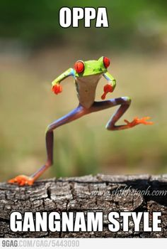 Oppa Froggy Gangnam Style - Bottled by Laugh Out Loud Funny Animal Quotes, Funny Animals, Cute Animals, Animal Sayings, Funniest Animals, Animal Humor, Funny Sayings, Animal Memes, Funny Frogs