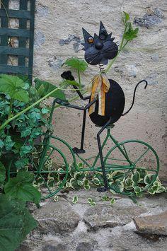 Chat à vélo