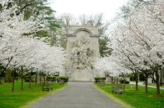 Early Glory, Princeton in the Spring