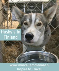 Vuokatti Husky Finland Lapland Finland, Las Vegas Hotels, Bangkok Thailand, Denmark, Norway, Safari, Husky, Tours, Hong Kong