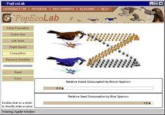 Population Ecology Simulation.