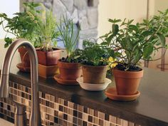 How to Grow Herbs Indoors --> http://hgtvgardens.com/herbs/how-to-grow-herbs-indoors?soc=pinterest    I like the look of the back-splash and faucet