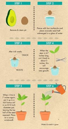 Grow an avocado tree from seed – Snug Hug & Co. - Plants - Grow an avocado tree from seed – Snug Hug & Co. You are in the right place about growing indoor fl - Home Vegetable Garden, Fruit Garden, Garden Plants, Indoor Plants, Edible Garden, Regrow Vegetables, Growing Vegetables, Veggies, Growing An Avocado Tree