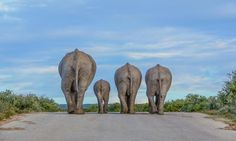 Time to go home for this elephant family!  Photo by Cathy Withers-Clarke.