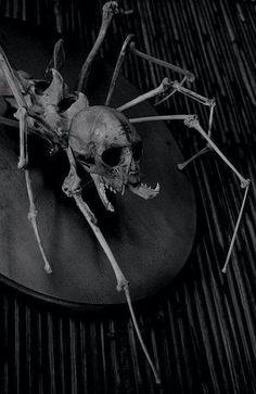 More skulls odditie spiders bones art skeletons spider skeleton spider