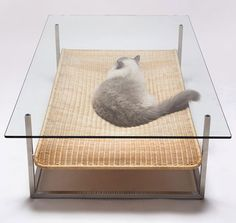 If I were a cat, I'd crawl into this hammock like den resting under a glass table made by Case Real. Cat furniture has never looked this good! via spoon&tamago Hammock project Pet Furniture, Furniture Design, Furniture Ideas, House Furniture, Unique Furniture, Furniture Companies, Japanese Cat, Japanese Style, Japanese Design