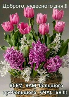 Good Morning Flowers, Tulips, Beautiful Flowers, Words, Plants, Inspiration, Montreal, Garden, Live