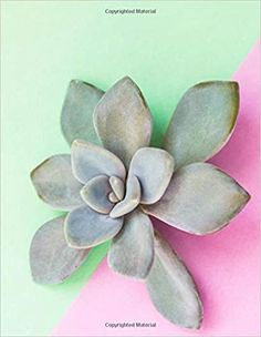 Garden Succulent Notebook: For shopping lists, notes, or poems.