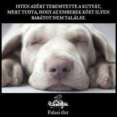 Dog Quotes Love, Wise Words, Labrador Retriever, Van, Pets, Funny, Animals, Labrador Retrievers, Animales