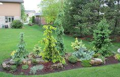 Front garden beds above parking area - miniature conifer garden?