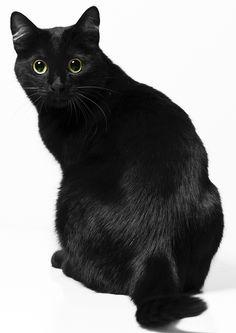 ผลการค้นหารูปภาพสำหรับ cat