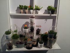 Succulenten  in glazen weck-potten