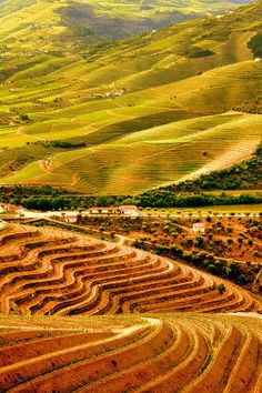 Douro Valley, home to world-famous Port wine, Portugal Spain And Portugal, Portugal Travel, Places To Travel, Places To See, Douro Portugal, Douro Valley, Valley Vineyards, Wine Vineyards, Port Wine