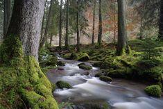 Las, Jesień, Omszałe, Drzewa, Kamienie, Potok, Rzeczka