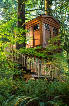 All you need is a password. Spend the night at one of these incredible tree-house hotels. Some include fireplaces and Jacuzzis.