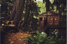 tree houses15 Treehouses you wish were in your backyard (22 photos)
