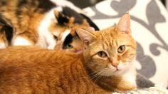 sick cat receives care
