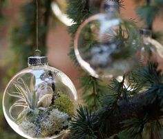 Christmas Tree Ornaments With Living Plants Shelterness | Shelterness