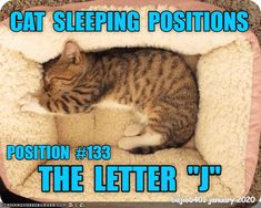 THE GUIDE TO CAT SLEEPING POSITIONS - LOLcats is the best place to find and submit funny cat memes and other silly cat materials to share with the world. We find the funny cats that make you LOL so that you don't have to. Silly Cats, Cute Cats And Kittens, Funny Cats, Funny Animal Memes, Funny Animals, Baby Animals Pictures, Cat Sleeping, Beautiful Cats, Cat Love
