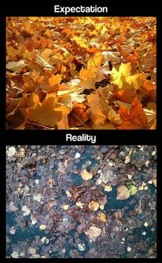 NOTHING HAS EVER BEEN MORE TRUE THAN THIS PHOTO! Seriously, Vermont is pretty for like 2 hours in the fall and then it all turns shit brown and gets wet.