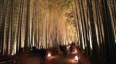 bamboo groves, Kyoto, Japan