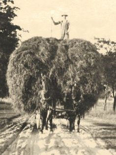 Sustainable farming - the way our grandparents did it. Rare Photos, Vintage Photographs, Vintage Pictures, Vintage Images, Country Life, Country Roads, Wooden Wagon, Agriculture, Horse Names