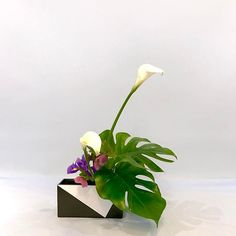 #ikebana #ikenobo #ikebanaclass #london #japaneseflowerarrangement #jiyuka #池坊#いけばな教室#ロンドン#自由花 #freestyle Arranged by Annette