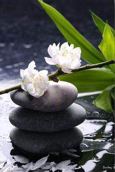 Zen ♥♥♥