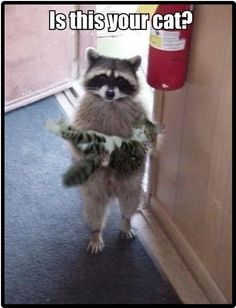 Funny Animal Pictures - View our collection of cute and funny pet videos and pics. New funny animal pictures and videos submitted daily. Keep Calm and Chive On! I Love Cats, Crazy Cats, Cute Cats, Weird Cats, Cat Fun, Strange Pets, Funny Animal Pictures, Cute Pictures, Random Pictures