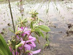水口には皐月の花を献花