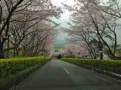 花立山 Hanatateyama.Asakura.