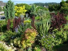 Another shot of Stacie Crooks' garden. The spiraea ties the burgundy and yellow together.