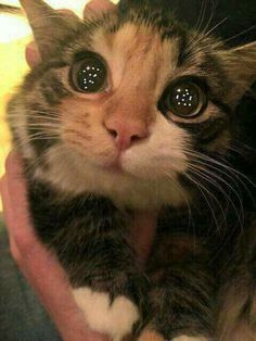 The first time the cat see a christmas tree awww <3
