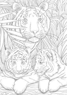 Tigers Animal Coloring PagesAdult