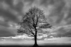 Great Tree by PhotoINC Studio is printed with premium inks for brilliant color and then hand-stretched over museum quality stretcher bars. 60-Day Money Back Guarantee AND Free Return Shipping.