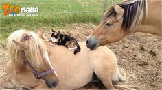 #Zoomalia - #Google+ #nouvelanchinois #ChineseNewYear #horse #cheval