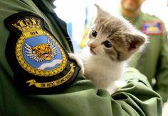 「え?何?仔猫に気付かなかった」仔猫を保護したイケメンの海軍大尉への注目度が半端ない - Spotlight (スポットライト)