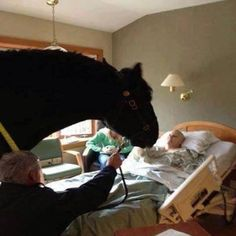 This hospital allowed a dying police officer to have a final visit with his beloved horse. . what an amazing thing to do! #horses #health