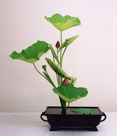 Ikebana with beautiful lotus buds