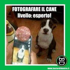 La fetta di #salame la meriterebbe il padrone come premio per l'inventiva! #bastardidentro #cane #foto www.bastardidentro.it