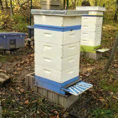 Customize a beehive Carol-Nelson-650