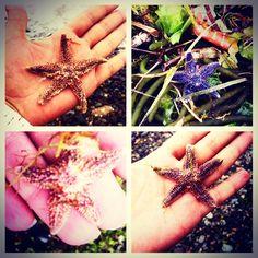 lovely starfish