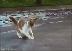 CAT+GIF+%E2%80%A2+Funny+Cat+trying+to+run+on+ice+Epic+fail+just+a+Cat+slipping+on+ice.gif (405×290)